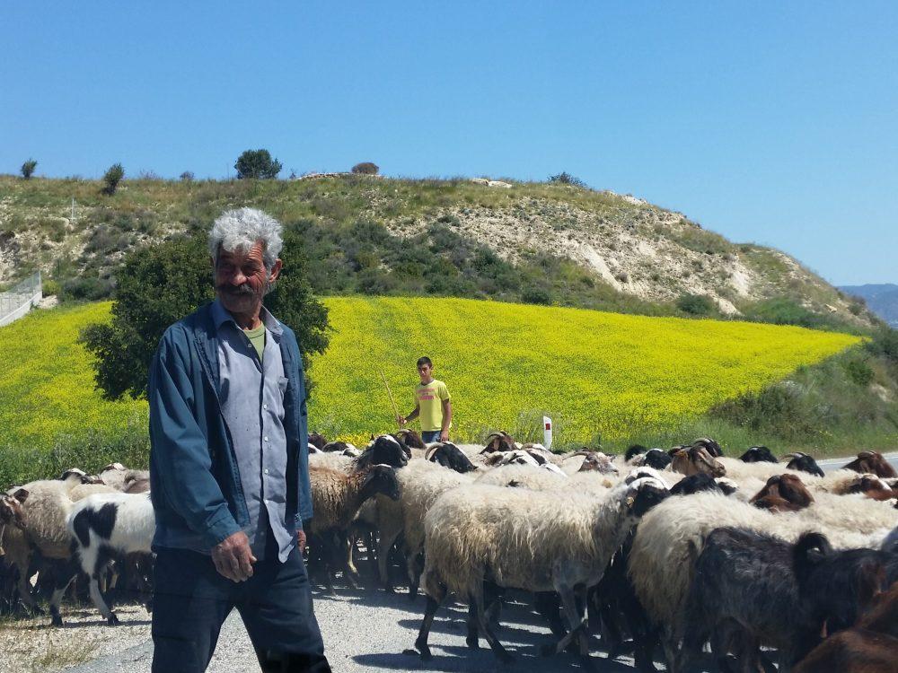 Cyprus Farmer
