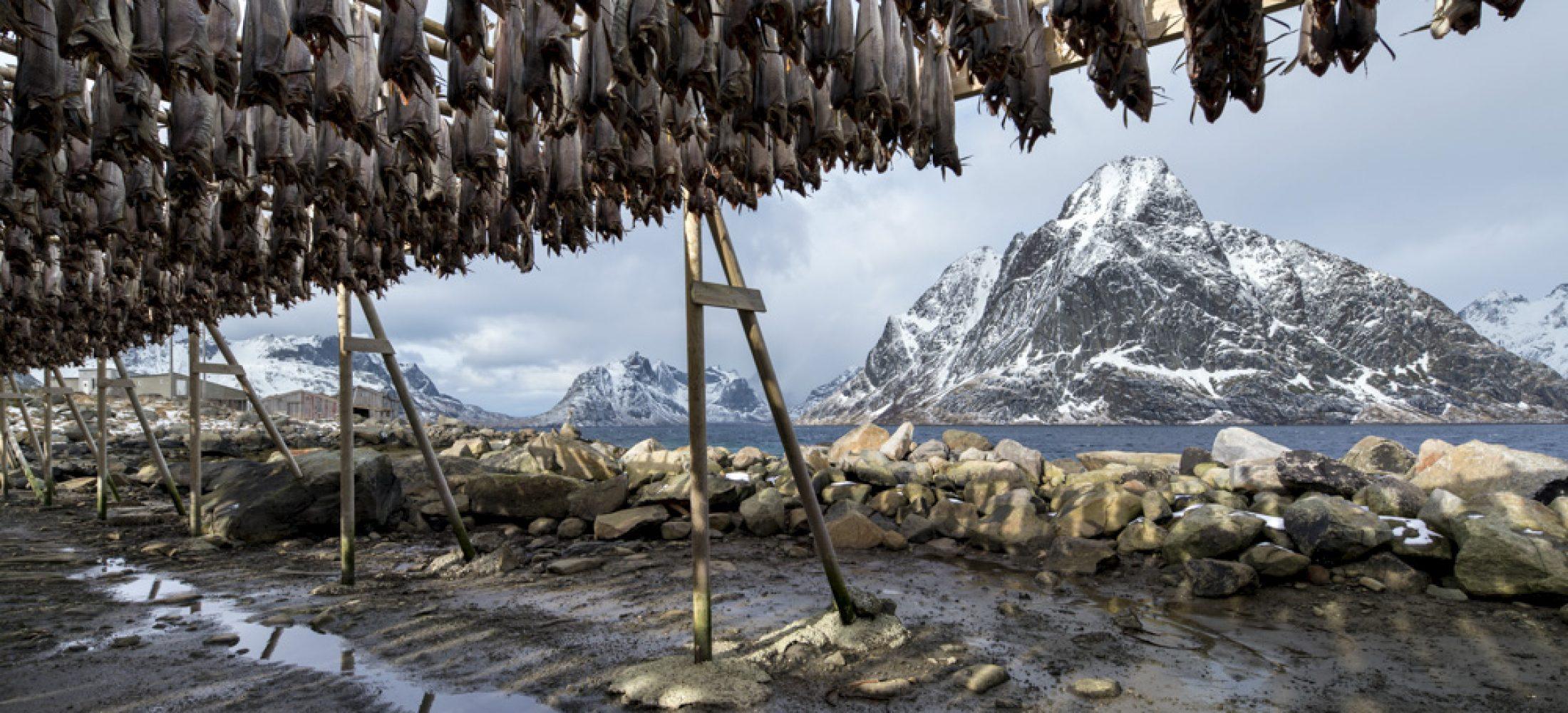 Stockfish at Reine